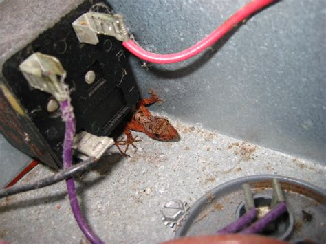furnace run capacitor replacement rheem hvac condenser run capacitor replacement guide 018