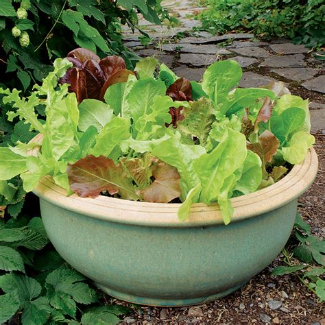 vegetable garden in pots growing vegetables in containers vegetable gardener