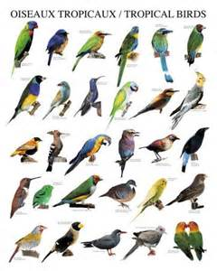 Essay On Different Types Of Birds In by Can You Identify All The Different Types Of Names Tropical Birds Different