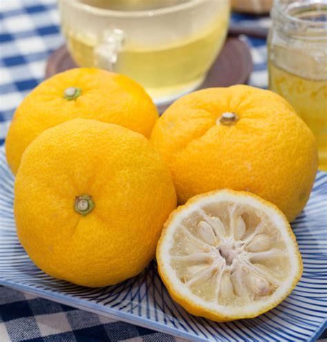 fruit tea yuzu pet 350ml yuzu fruit tea is strawberry a fruit