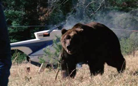 watch grizzly 1976 movie grizzly giant kaijumatic
