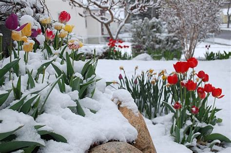 Winter Garden Florist by Keep Your Flower Garden Blooming All Year With 3 Practical Steps