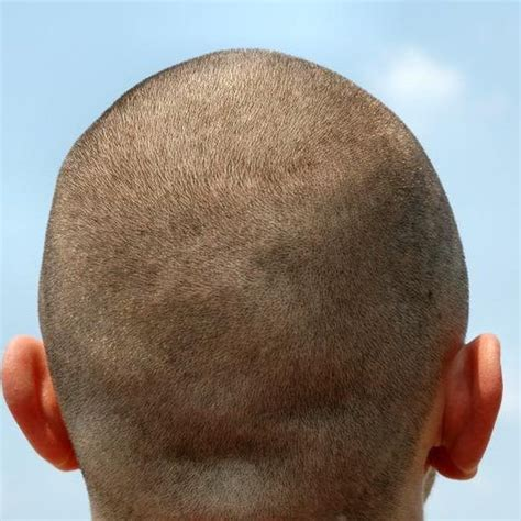 shaved head to hide graying hair rear view close up of a man s shaved head wow grey hair