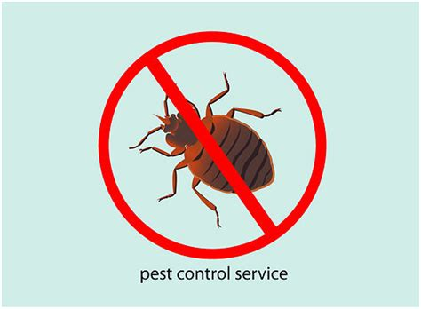 bed bug pest control service mattress time bed bugs all you need to know