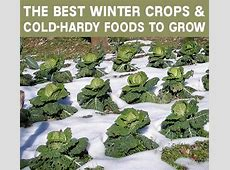 The Best Winter Crops and Cold-Hardy Foods To Grow ... Year Round Weather