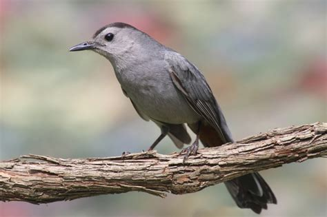 common springtime birds and where to find them on cape cod