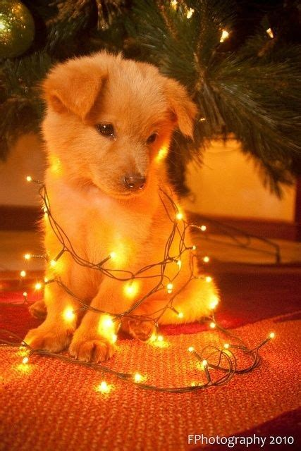 30 dogs who think they re christmas trees christmas