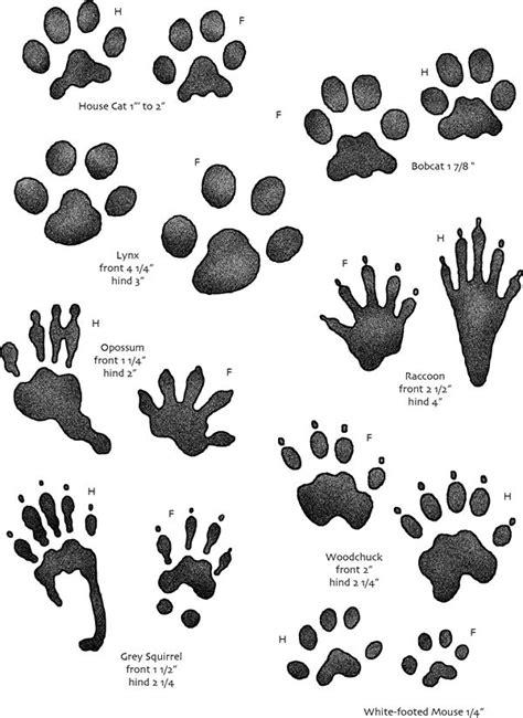 printable animal track guide 22 best animal tracks images on pinterest workshop bear