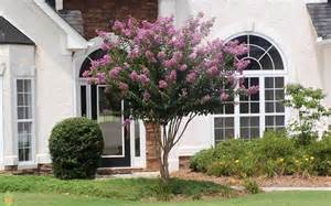 Purple Flowering Bushes Shrubs - muskogee crape myrtle trees for sale the planting tree