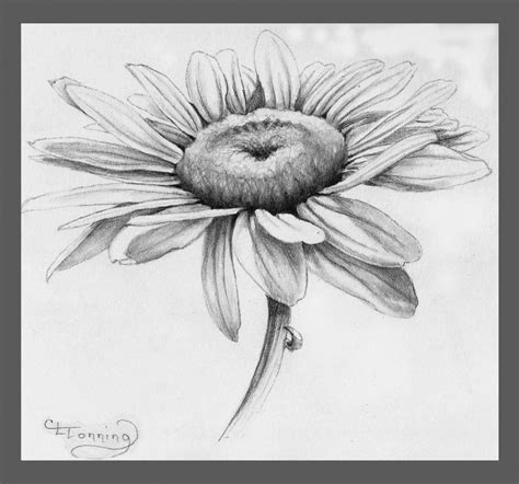 C Sketches by Flower Sketch Www Pixshark Images Galleries