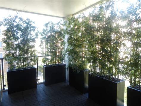 Balcony Screening Plants by Balcony Plants