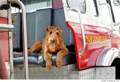 fire house dogs pered firehouse dog doesn t hunt sfgate
