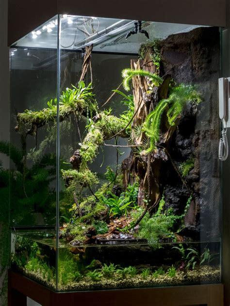 img water terrarium frog terrarium planted aquarium