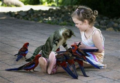 culli rotti nutrire affetto verso i fratelli animali circolo