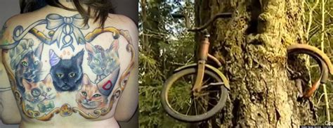 tattoo cat tree tree swallows bike vs crazy cat lady the weird news top