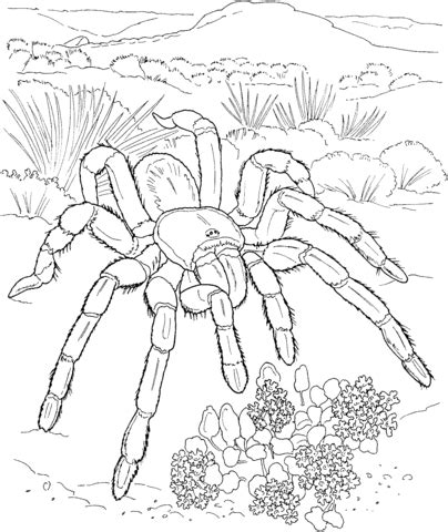 301 Moved Permanently Tarantula Coloring Page