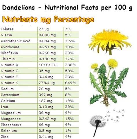 dandelion facts dandelion leaf tea nutrition theleaf co