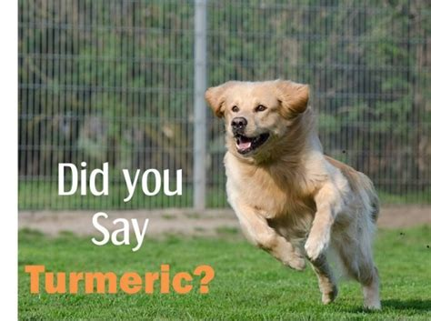 turmeric paste for dogs turmeric for arthritis 8 evidence based benefits dosage and recipes