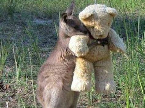 doodlebug kangaroo a simple hug gave doodlebug the kangaroo worldwide fame