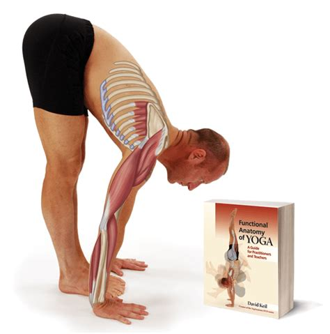 libro functional anatomy of yoga yoga anatomy book functional anatomy of yoga by david keil