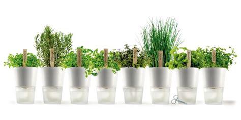 coltivare piante aromatiche in vaso consigli per coltivare erbe aromatiche fresche sul balcone