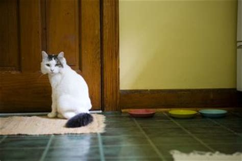 stop cat on rug how to keep new cat from attacking one
