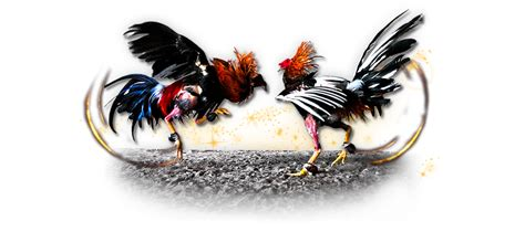 Agen Judi Sabung Ayam S128 Terpercaya