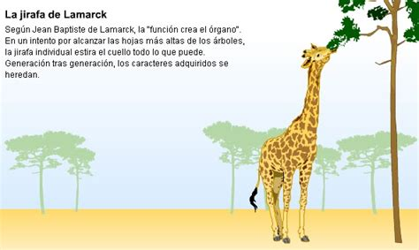 imagenes de las jirafas de darwin la teor 237 a de lamarck