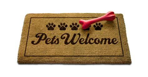 how to puppy proof your house pet proof your home