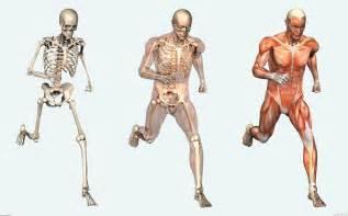 Alfa img   Showing > Science Human Body
