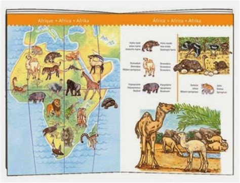 the inner of animals surprising observations of a world books a puzzle with a difference djeco observation jigsaw