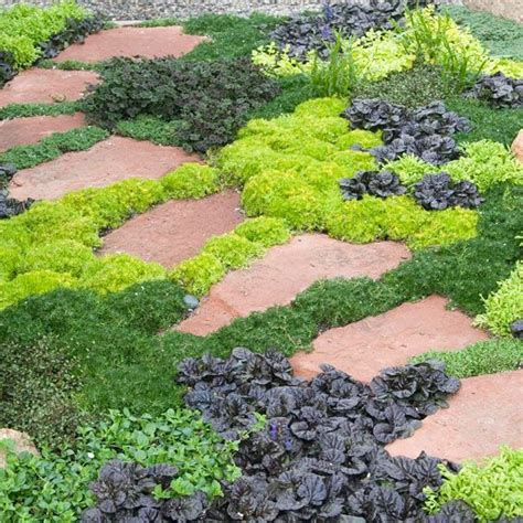 backyard ground cover ideas 17 best ideas about succulent ground cover on