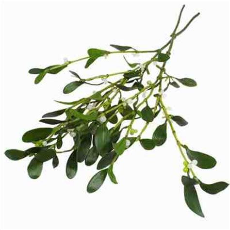 mistletoe higgledy garden
