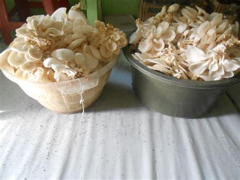 budidaya jamur tiram jual baglog jual bibit budidaya