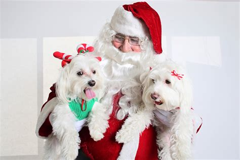 santa puppy all list of different dogs breeds santa clause dogs