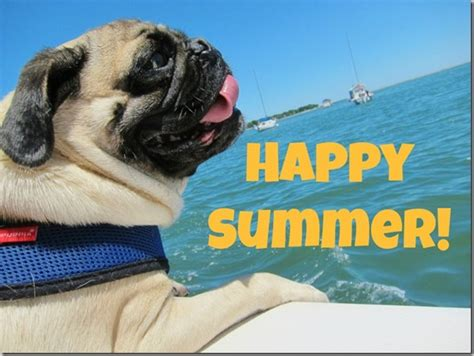 pug summer 3 apps to make the most of the days of summer yapp