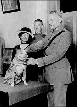 Sergeant Stubby Timeline Dogs Stubby