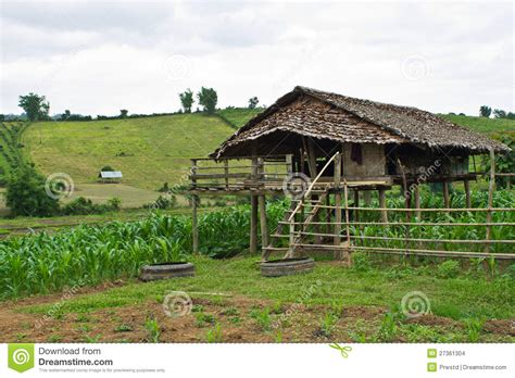 Vitamin Cottage Green Mountain by Cottage In A Corn Field In Chiangmai Stock Photography