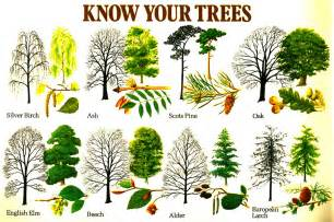 trees types know your trees another aide m 233 moire for the witch