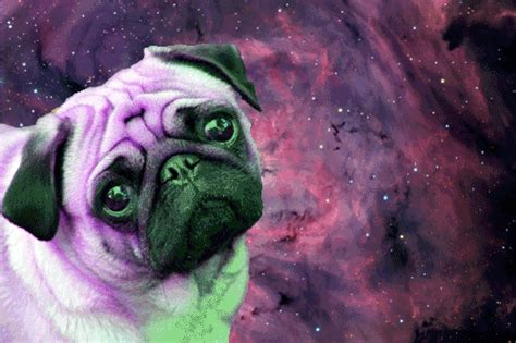 Dogs In Space yeah dogs in space