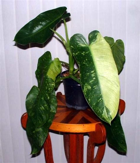 modern houseplants modern house plants ta by urgoodbuyz