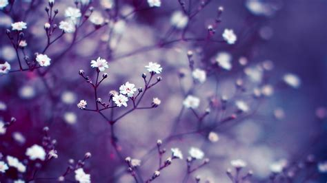 wallpaper with flowers flowers background hd background point flowers