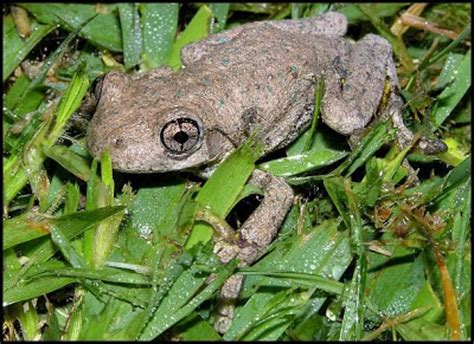 i found a frog in my backyard hunter valley backyard nature 51 a summary of my