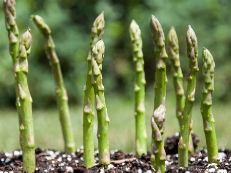 the best vegetables to plant in early