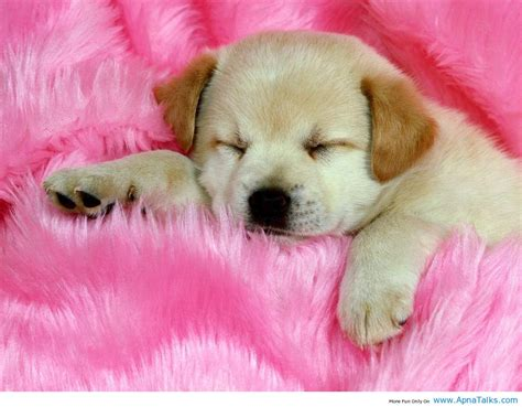 baby dog wallpapers wallpaper cave