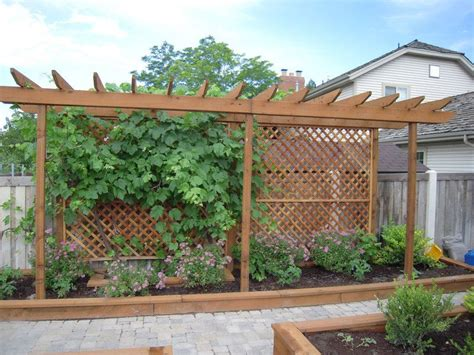 trellis for a grape vine and screen from the neighbor