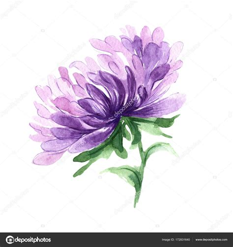 aster flower tattoo wildflower aster flower in a watercolor