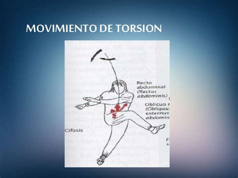 cadenas musculares tronco kinesioterapia cadenas musculares
