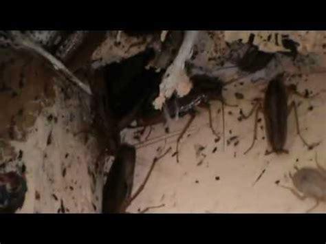 Tuer Un Cafard by Comment Tuer Un Cafard Poisson Naturel