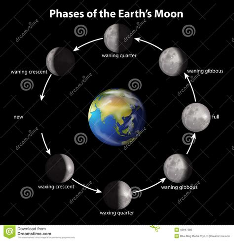Calendar W Moon Phases Phases Of The Earth S Moon Stock Vector Image 46947388